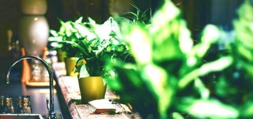 kwiaty-w-lazience
