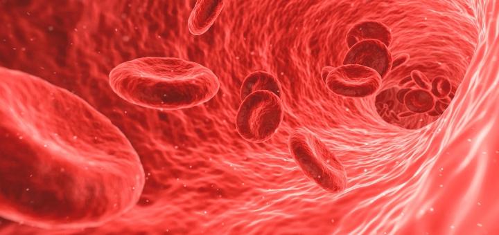 morfologia krwi krwinki