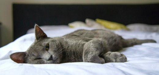 spanie z kotem w lozku