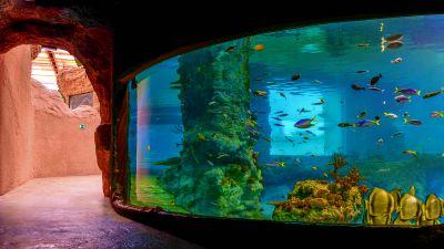 zoo wroclaw afrykarium akwarium