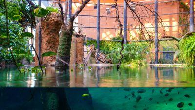 zoo wroclaw afrykarium pod woda