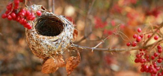 syndrom pustego gniazda