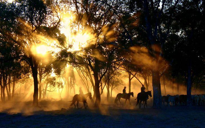twardogora jesien konie