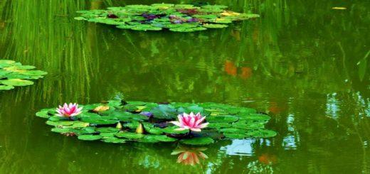 oczko wodne w malym ogrodzie