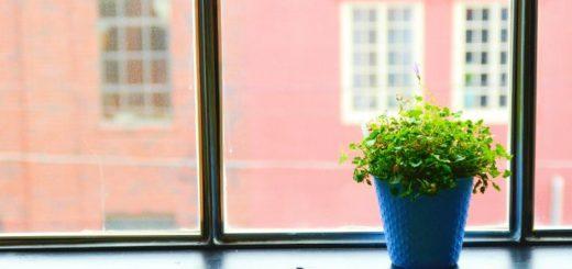 rosliny oczyszczajace powietrze w domu