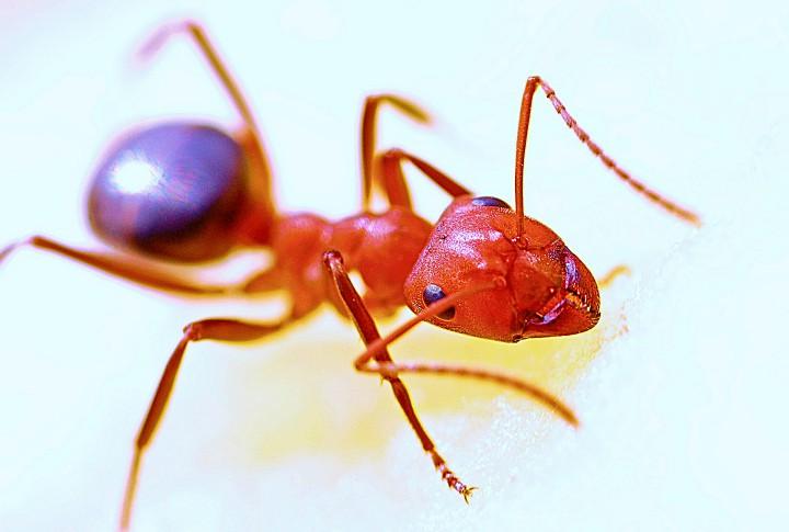 fusy z kawy odstrasza mrowki