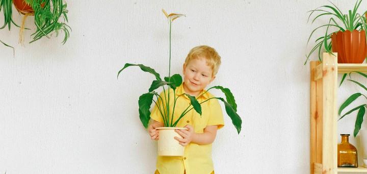 rosliny doniczkowe niebezpieczne dla dzieci