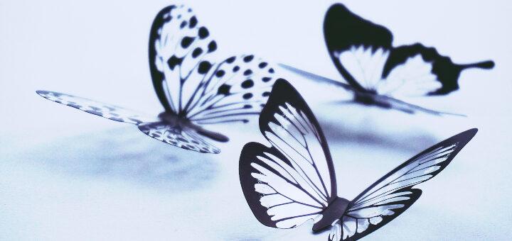 taniec z motylami motyle